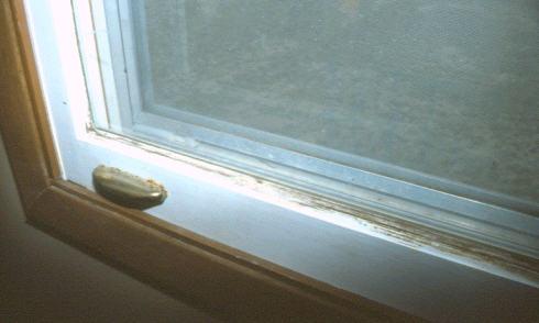 Mold_Window